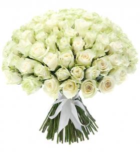 151 Белая Роза фото