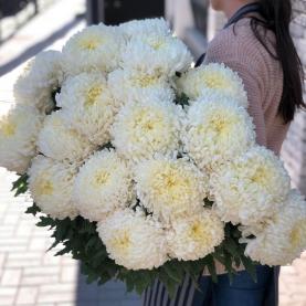 17 Кремовых Хризантем Бигуди фото