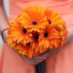 17 Оранжевых Гербер фото
