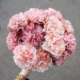 17 Розовых Гвоздик фото