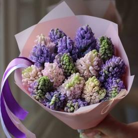 17 Розовых и Фиолетовых Гиацинтов фото