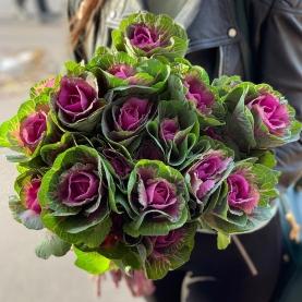19 Розовых Брассик фото