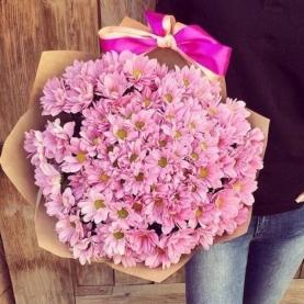 19 Розовых Кустовых Хризантем фото