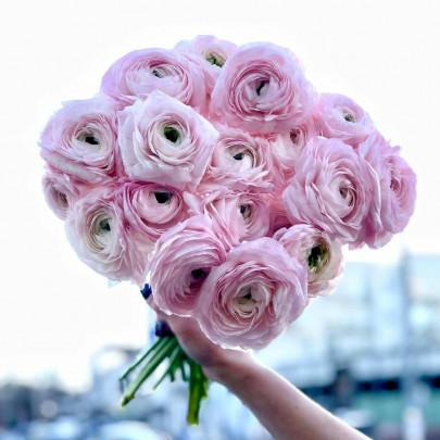 19 Розовых Ранункулюсов фото