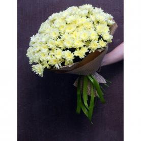 19 Кремовых Кустовых Хризантем фото