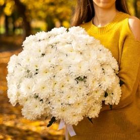 21 Белая Кустовая Хризантема фото