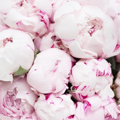 21 Розовый Пион фото