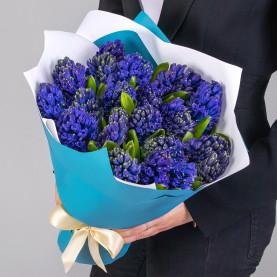 21 Синий Гиацинт фото