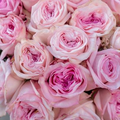 25 Розовых Роз Ароматных Пионовидных фото
