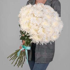 25 Белых Хризантем Бигуди фото
