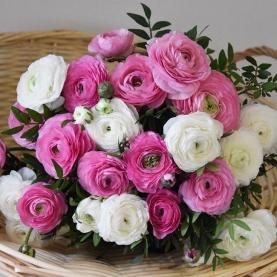 25 Белых и Розовых Ранункулюсов фото