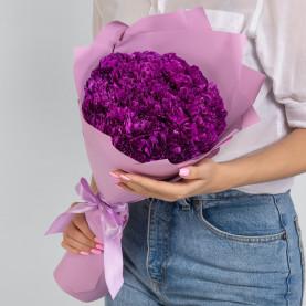 25 Фиолетовых Гвоздик фото