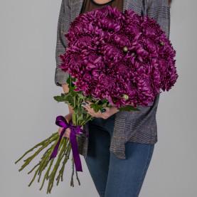25 Фиолетовых Хризантем Бигуди фото
