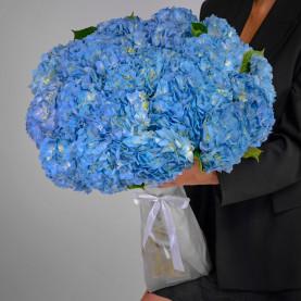 25 Голубых Гортензий фото