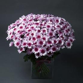 25 Хризантем Светло-Сиреневых Кустовых фото