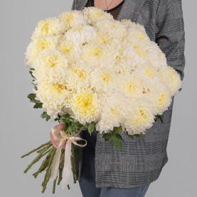 25 Кремовых Хризантем Бигуди фото