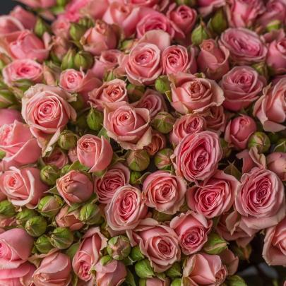 25 Кустовых Розовых Роз (70 см.) фото