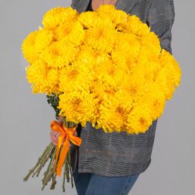 25 Желтых Хризантем Бигуди фото