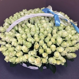 251 Белая Роза (40 см.) фото