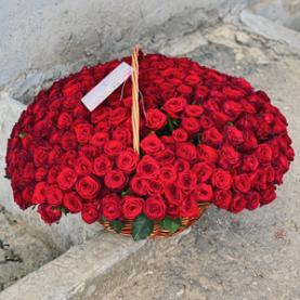 251 Красная Роза (40 см.) фото