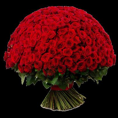 251 Красная Роза Premium (50/60 см.) фото