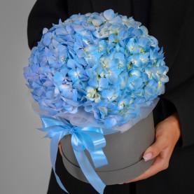 3 Голубые Гортензии в коробке фото