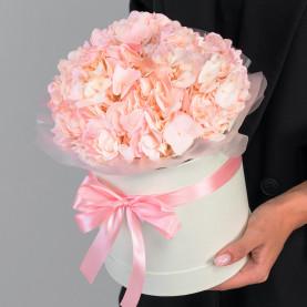 3 Розовые Гортензии в коробке фото