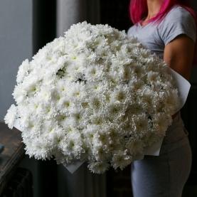 31 Белая Кустовая Хризантема фото