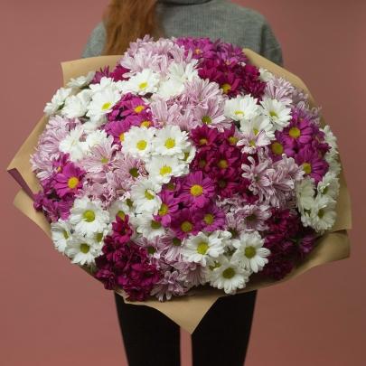 31 Бело-Розовая Хризантема фото
