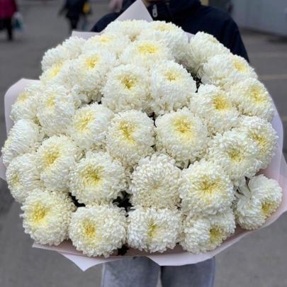 31 Хризантема Fred фото