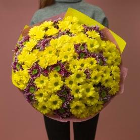 31 Разноцветная Хризантема Кустовая фото