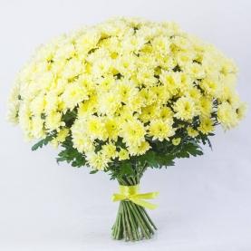 31 Желтая Кустовая Хризантема фото