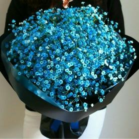 51 Синяя Гипсофила фото
