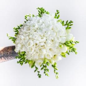 35 Белых Фрезий фото