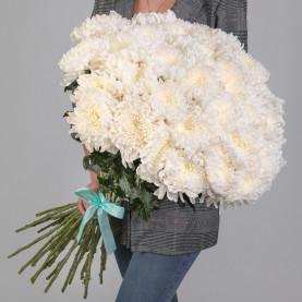 35 Белых Хризантем Бигуди фото