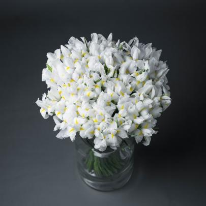 35 Белых Ирисов фото