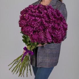 35 Фиолетовых Хризантем Бигуди фото