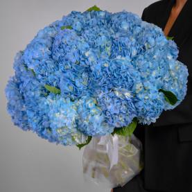 35 Голубых Гортензий фото