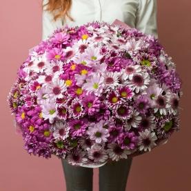 35 Розовых Хризантем Кустовых Микс фото