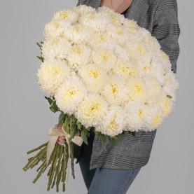 35 Кремовых Хризантем Бигуди фото