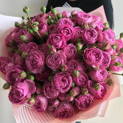 35 Кустовых Пионовидных Светло-Малиновых Роз (50 см.) фото
