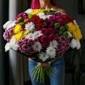 35 Разных Кустовых Хризантем фото