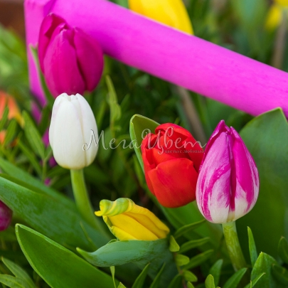 """Ящик с цветами """"35 Тюльпанов"""" фото"""