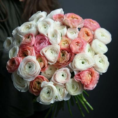 39 Бело-Розовых Ранункулюсов фото