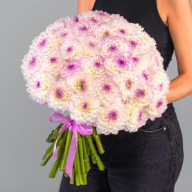 45 Бело-Фиолетовых Георгинов фото