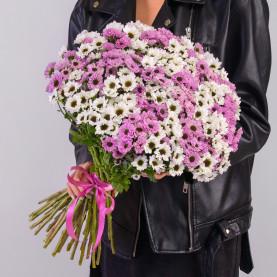 45 Белых и Розовых Сантини Инь-Янь фото