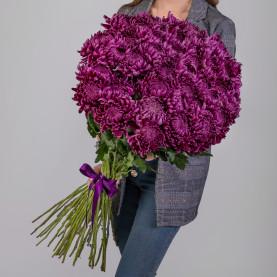 45 Фиолетовых Хризантем Бигуди фото