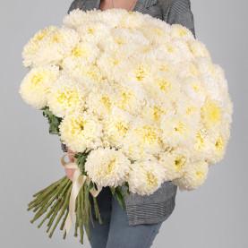 45 Кремовых Хризантем Бигуди фото