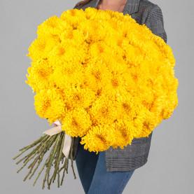 45 Желтых Хризантем Бигуди фото