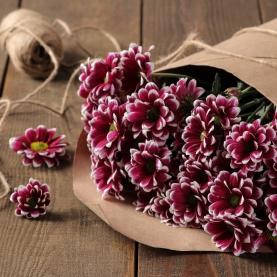 5 Хризантем фиолетовых фото